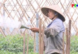 Nông thôn mới Phú Thọ: Đẩy mạnh phát triển nông nghiệp theo hướng hàng hóa