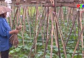 Phát triển cây rau vụ đông bằng các loại giống mới cho năng suất chất lượng cao