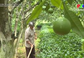 Phát triển kinh tế ở vùng đồng bào Cao Lan