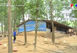 Phát triển kinh tế trang trại ở Thanh Thủy
