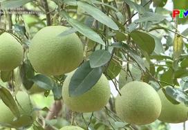 Phát triển nông nghiệp bền vững