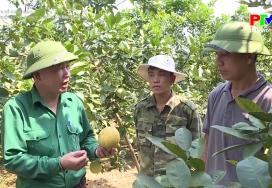Phát triển nông nghiệp theo hướng hữu cơ