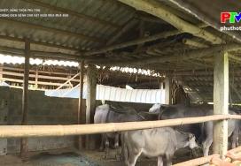 Phòng chống dịch bệnh cho vật nuôi mùa mưa bão
