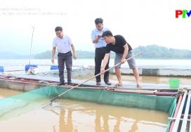 Phòng trị bệnh cho cá trong thời điểm nắng nóng