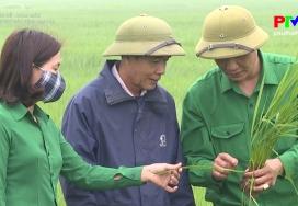 Phòng trừ sâu bệnh hại lúa