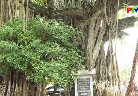 Phú Thọ trong dòng chảy mùa thu lịch sử
