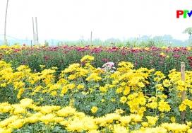 Xuân về trên làng hoa