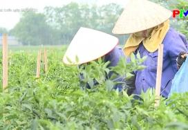 Đẩy mạnh xuất khẩu hàng nông sản
