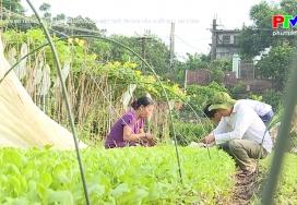 Hiệu quả xử lý đất bằng năng lượng mặt trời trong sản xuất rau an toàn