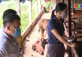 Sử dụng đệm lót sinh học trong chăn nuôi