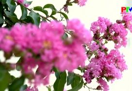 Câu hỏi vì sao: Thế giới loài hoa
