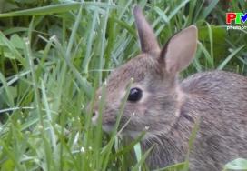 Những câu hỏi vì sao: Tìm hiểu về loài thỏ