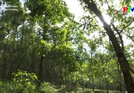 Thoát nghèo từ rừng