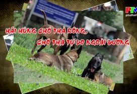 Hãi hùng chó thả rông, chó thả tự do ngoài đường