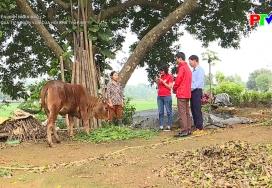 Truyền hình nhân đạo - Hiệu quả từ nguồn vốn của Hội Chữ thập đỏ