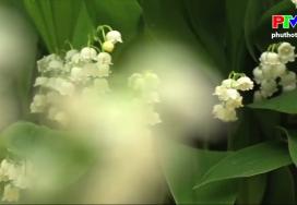 Những câu hỏi vì sao - Vẻ đẹp các loài hoa