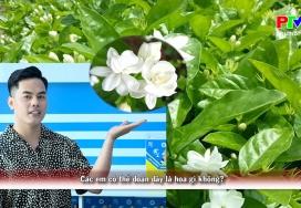 Vui học tiếng Anh - Loài hoa