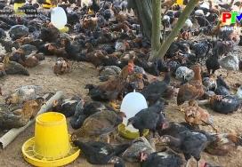 Chăn nuôi an toàn sinh học