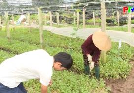 Kỹ thuật trồng rau có che vòm nilon