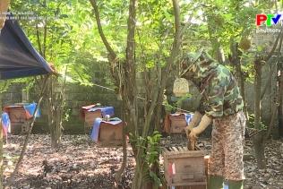 Công nghệ và đời sống - Ứng dụng khoa học kĩ thuật vào nuôi ong lấy mật