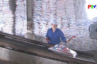 Công ty Supe phốt phát và hóa chất Lâm Thao với nông dân