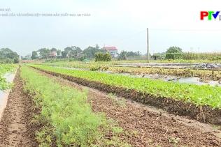 Hiệu quả của vải không dệt trong sản xuất rau an toàn