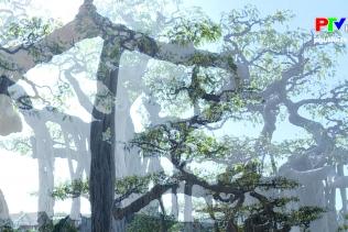 Khoảnh khắc cuộc sống - Nghệ thuật chơi cây cảnh
