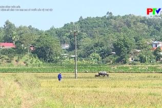 Nông thôn mới Phú Thọ - Nhân rộng mô hình thu gom bao bì thuốc bảo vệ thực vật