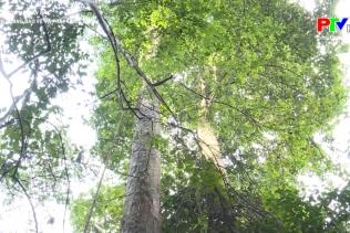 Nông thôn mới Tây Bắc - Tuyên Quang bảo vệ và phát triển rừng