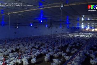 Phát triển chăn nuôi đảm bảo an toàn sinh học