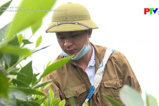 Nông thôn mới Phú Thọ - Thực hiện nghị quyết 05 về hỗ trợ phát triển nông nghiệp