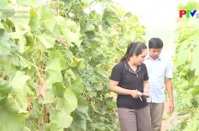 Nông sản an toàn - Dưa lưới công nghệ cao