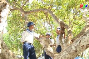 Khoảnh khắc cuộc sống - Cây tra trên quần đảo Trường Sa