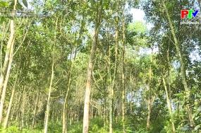 Nâng cao giá trị kinh tế đồi rừng
